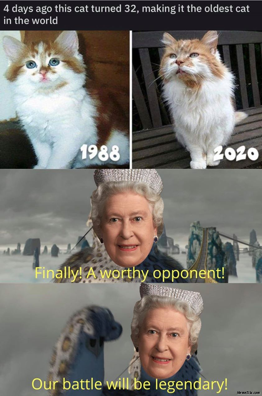 4 days ago this cat turned 32 Finally a worthy opponent battle will be legendary meme