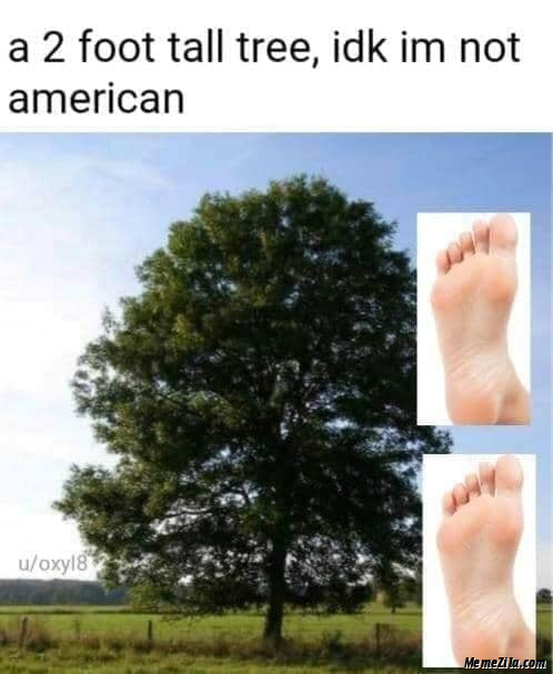 A 2 foot tall tree or something idk Im not American meme