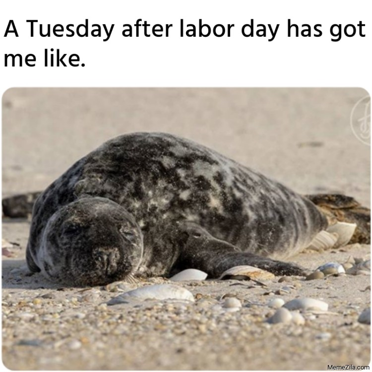 A Tuesday after labor day has got me like meme