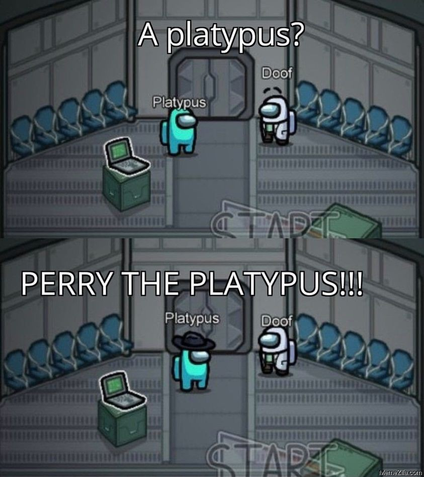 A platypus Perry the platypus meme