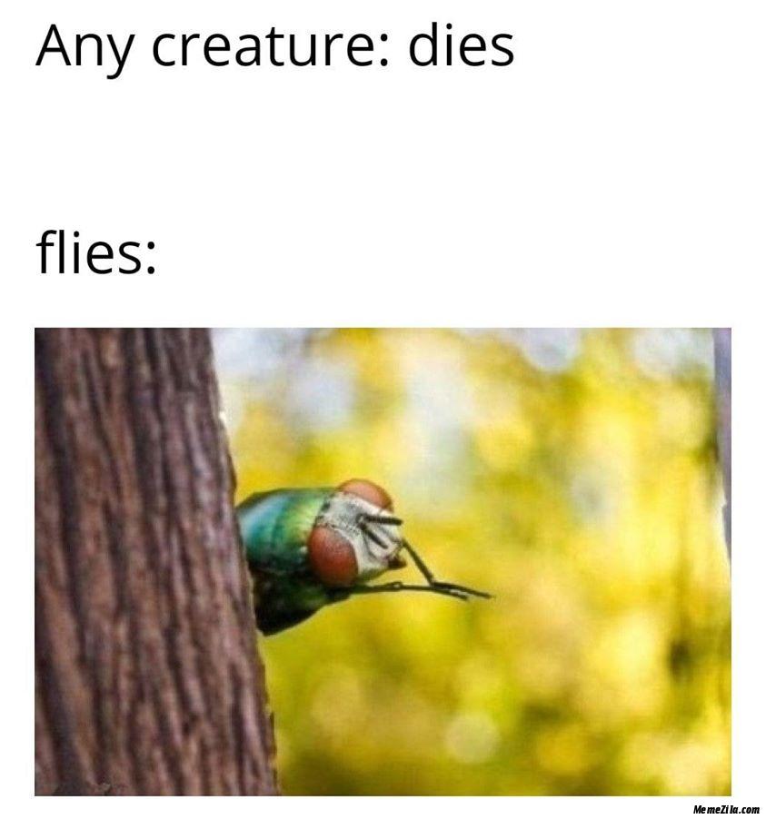 Any creature dies Flies meme