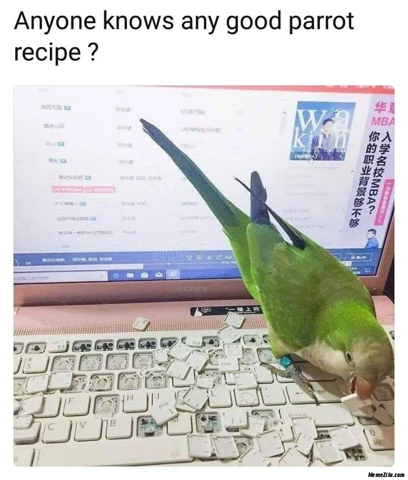 Anyone knows any good parrot recipe meme