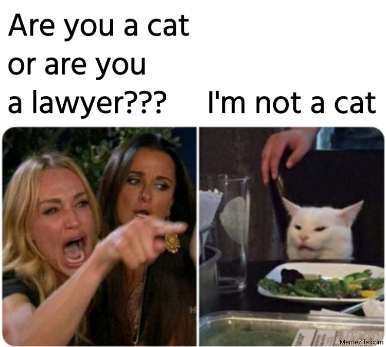 Are you a cat or are you a lawyer Im not a cat meme
