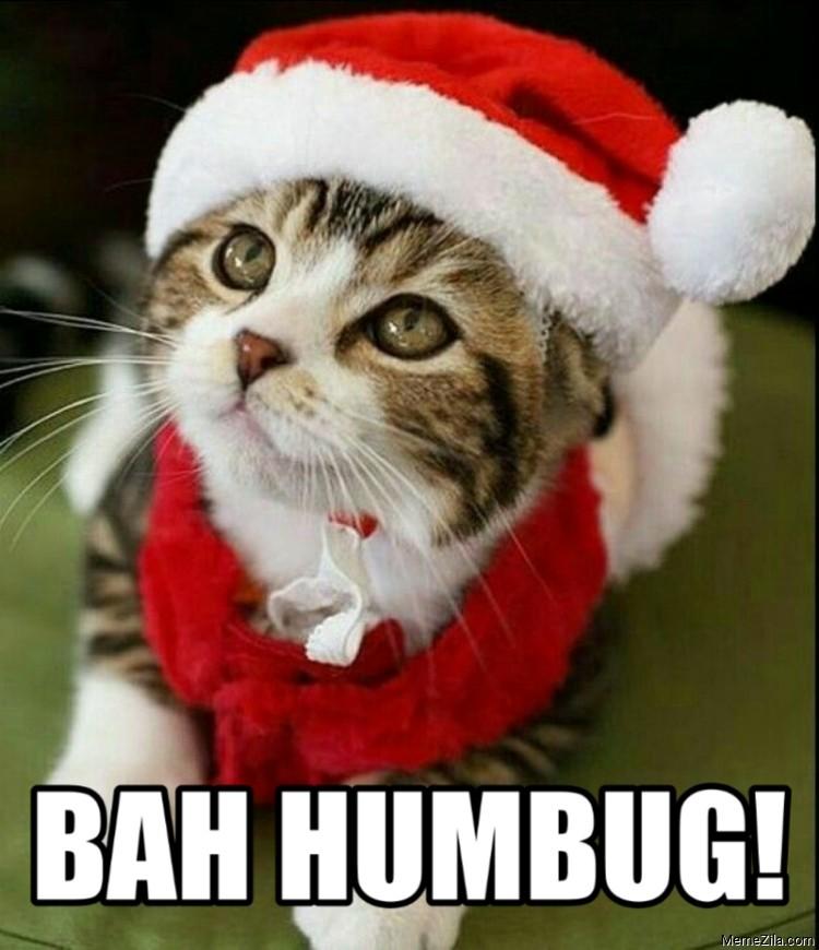 Bah humhug cat meme
