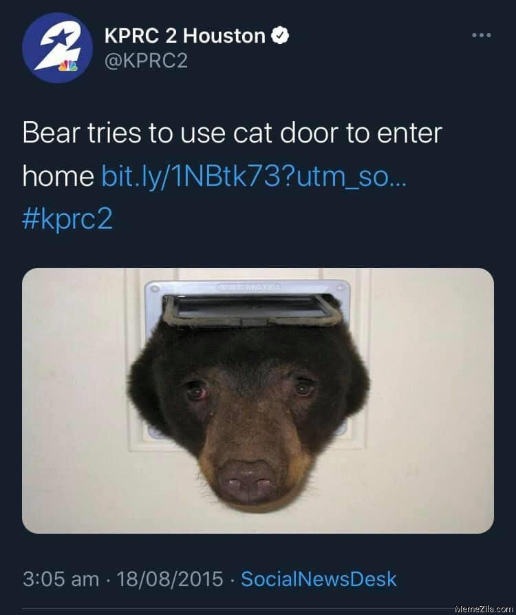 Bear tries to use the cat door to enter home meme