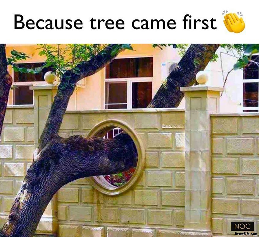 Because tree came first meme
