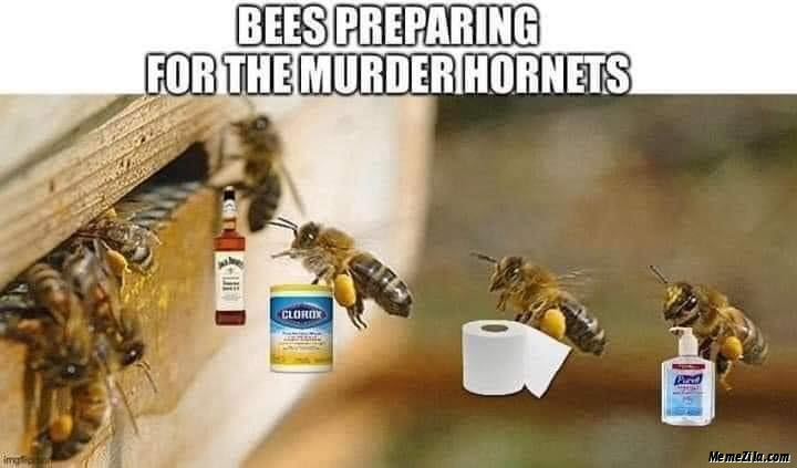 Bees preparing for the murder hornets meme