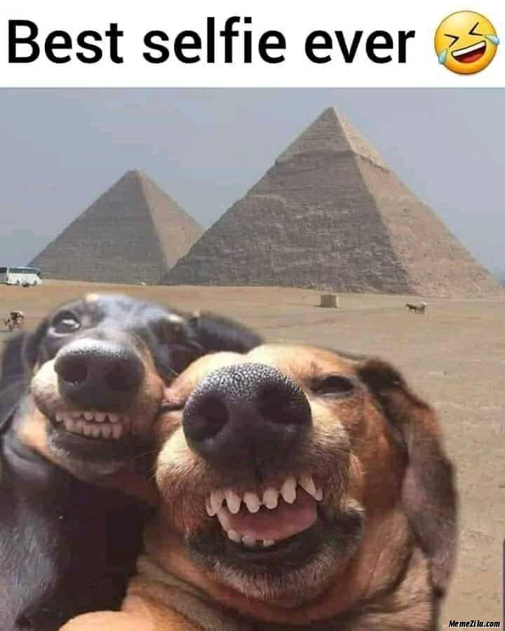 Best selfie ever meme
