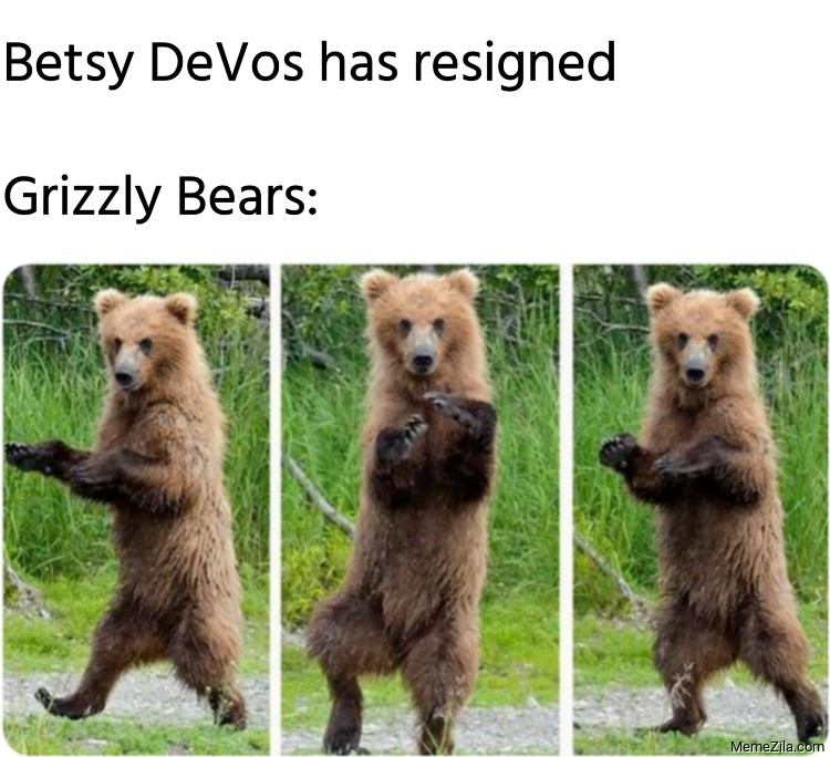 Betsy DeVos has resigned Meanwhile grizzly bears meme