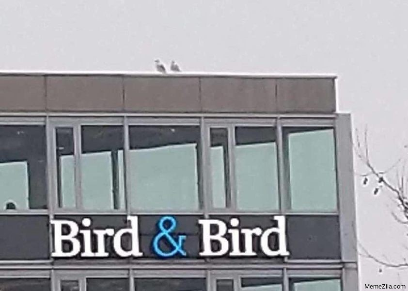 Bird and bird meme