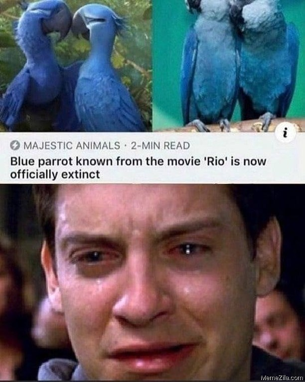 Blue parrot known from the movie Rio is now officially extinct meme