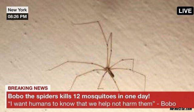 Bobo the spider kills 12 mosquitoes in a day meme