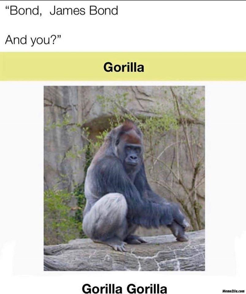 Bond james bond and you gorilla gorilla meme