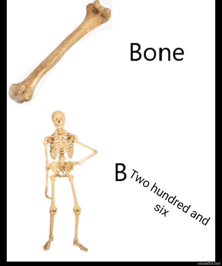 Bone B two hundred and six meme