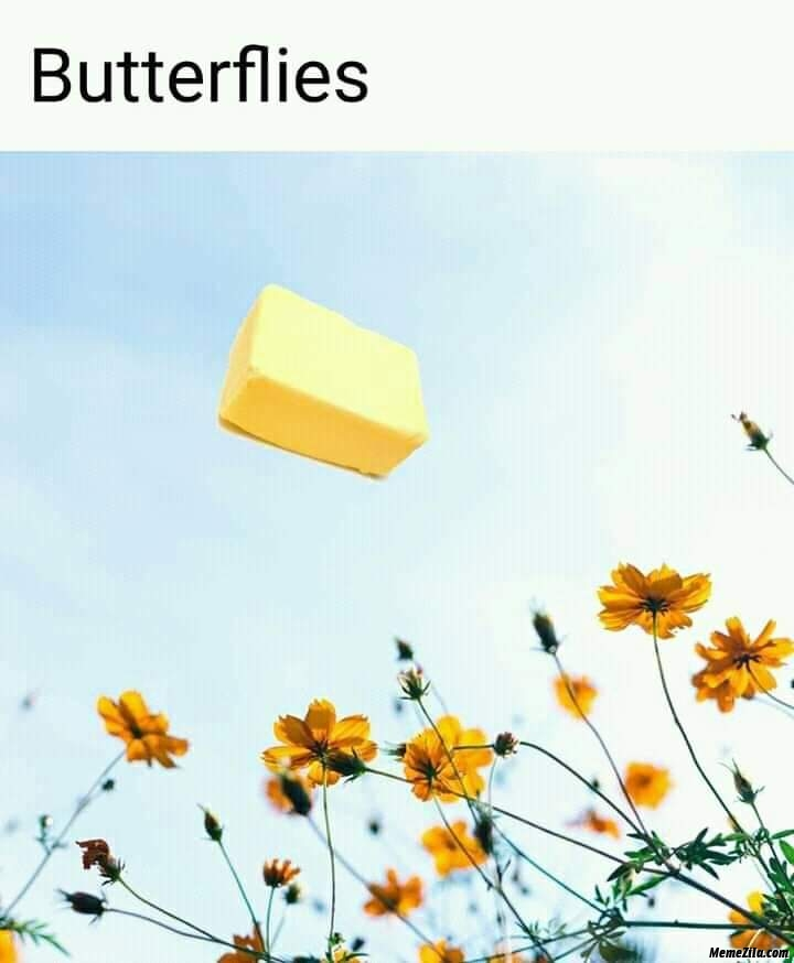 Butter fly butterfly meme