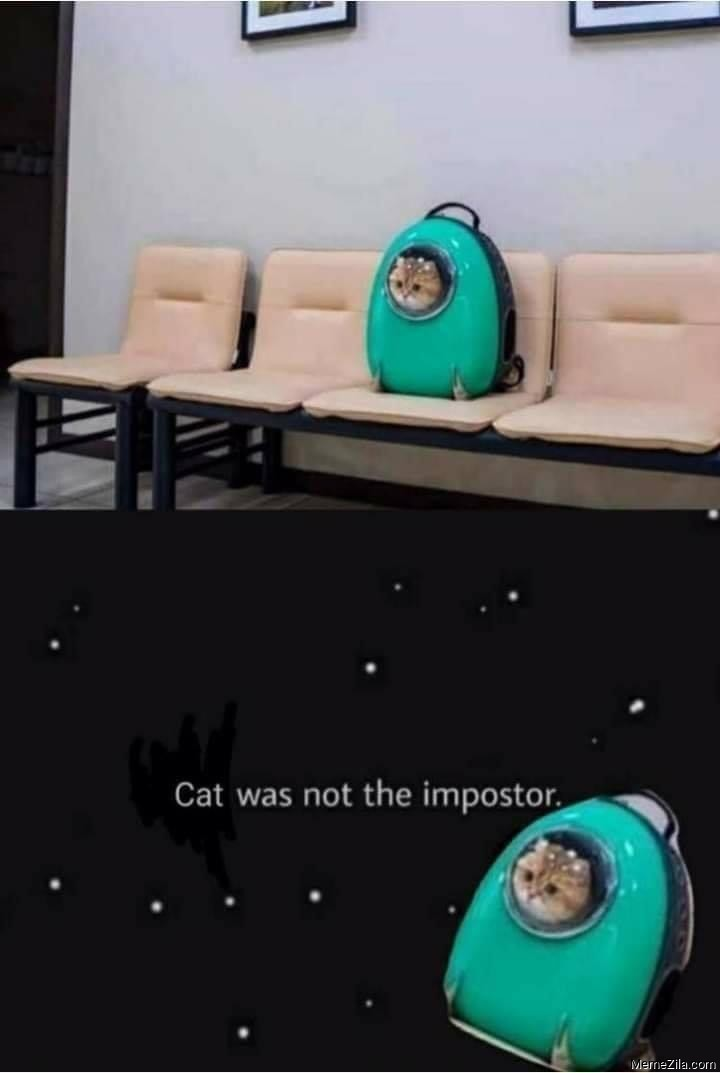 Cat was not the imposter meme