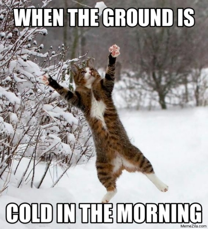 Cat when the ground is cold in the morning meme