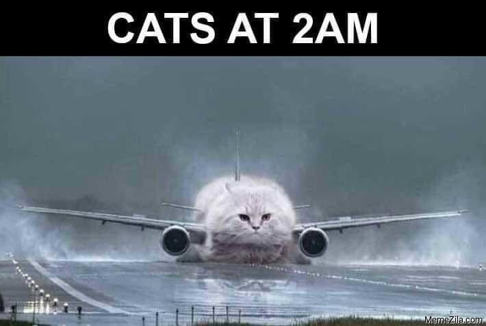 Cats at 2am meme
