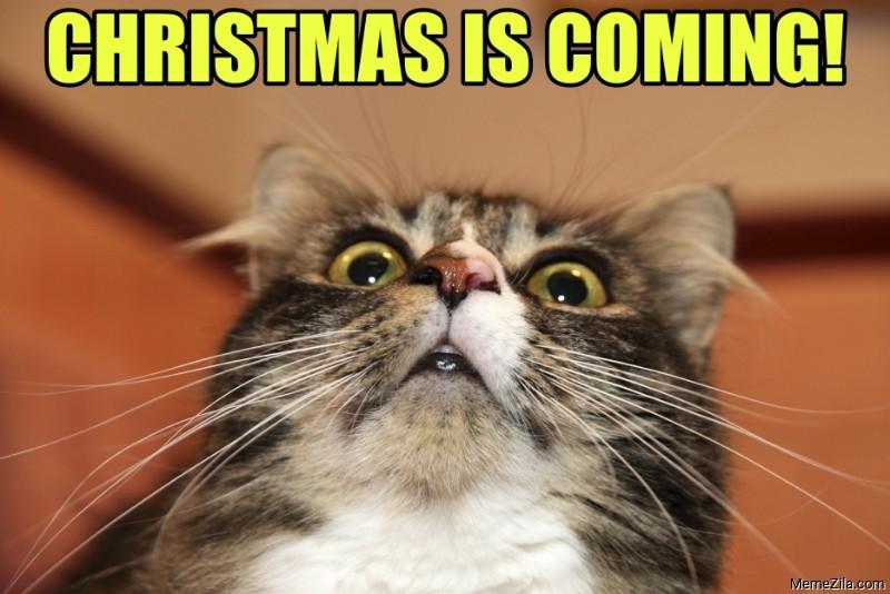 Christmas is coming cat meme