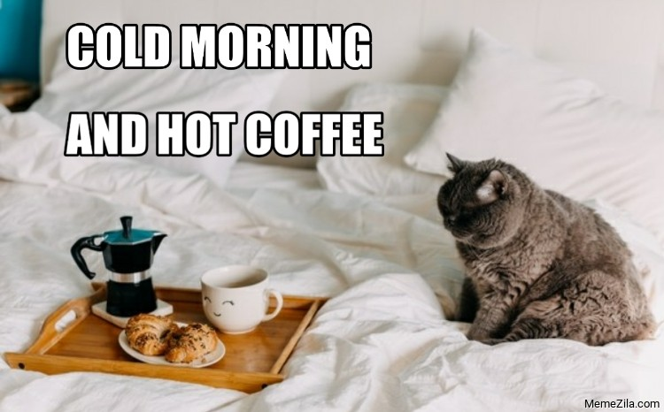 Cold morning And hot coffee cat meme