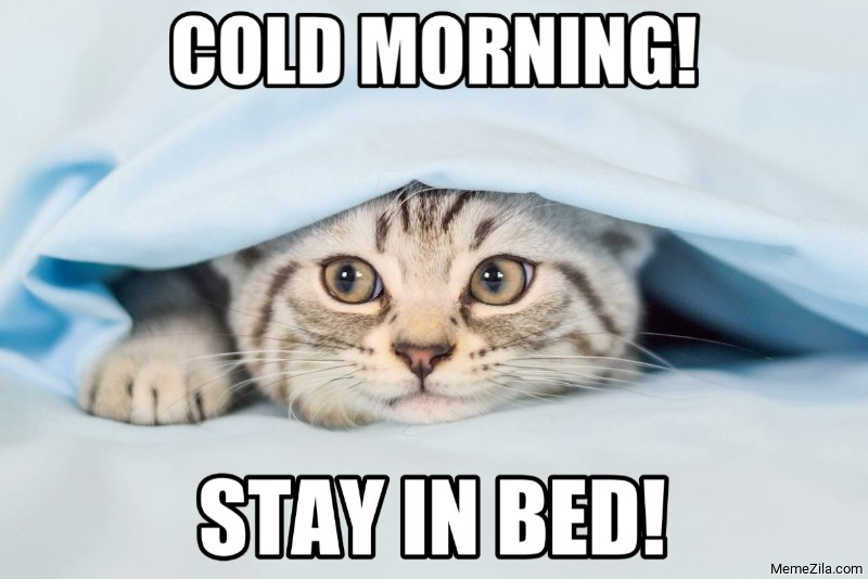 Cold morning Stay in bed cat meme