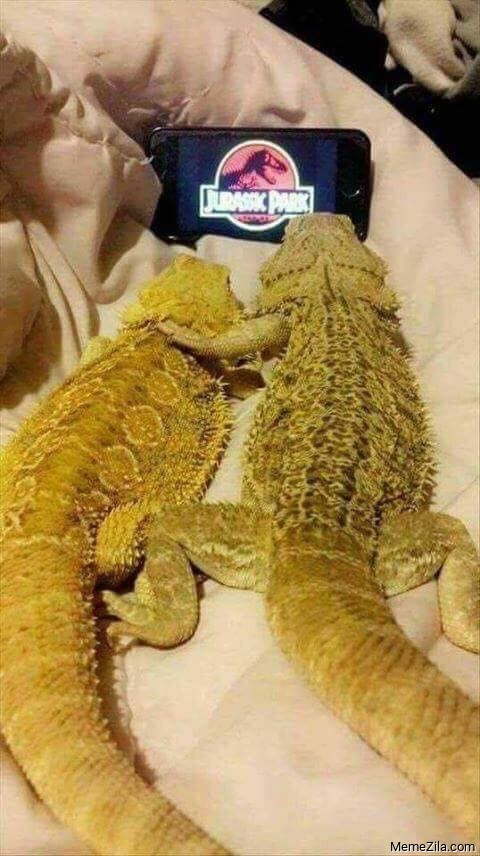 Crocodile couple watching Jurasic park meme