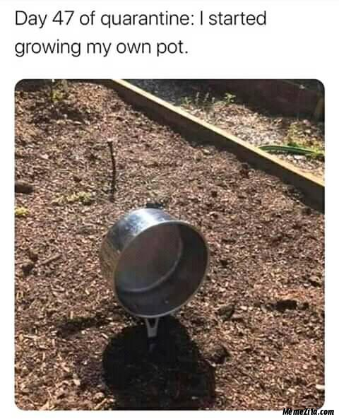 Day 47 of quarantine I started growing my own pot meme