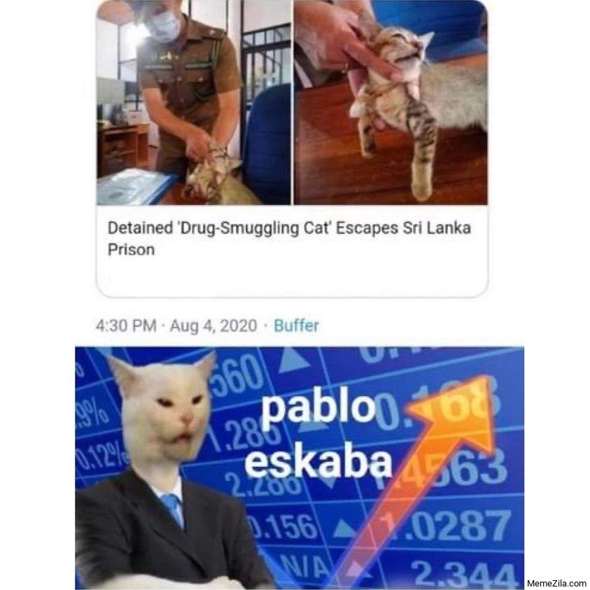 Detained drug smuggling cat escapes Sri Lanka prison Pablo eskaba meme