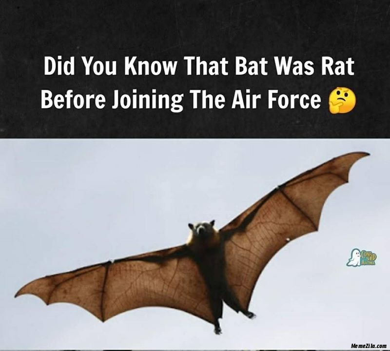 Did you know that bat was rat before joining the Airforce meme