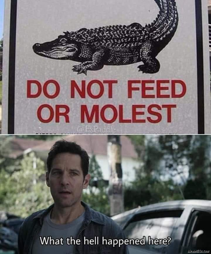 Do not feed or molest What the hell happened there meme