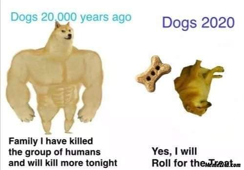 Dogs dont get the virus so are free to travel meme ...