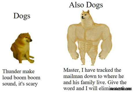 Dogs Thunder makes loud boom boom sound Also dogs I have tracked the mailman meme