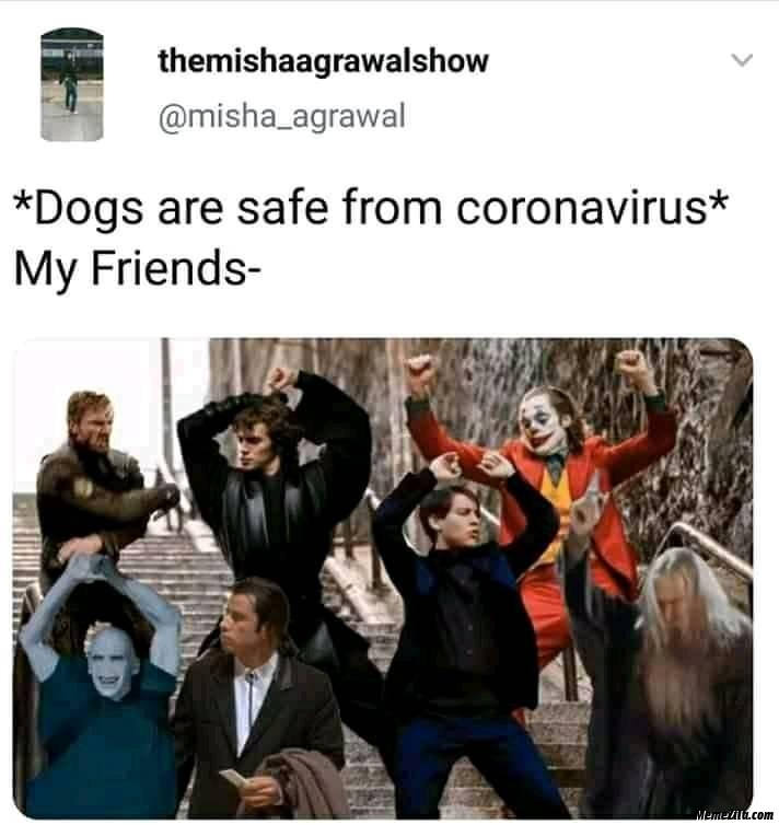 Dogs are safe from corona virus meanwhile my friends meme