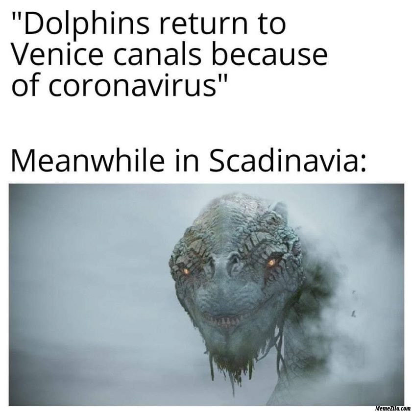 Dolphins return to Venice canals because of coronavirus Meanwhile in Scandinavia meme