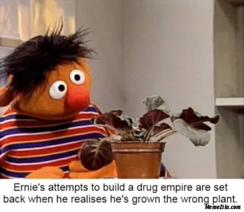 Ernies attempts to build a drug empire are set back when he realised he grown wrong the plant meme