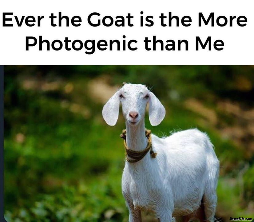 Ever the goat is more photogenic than me meme