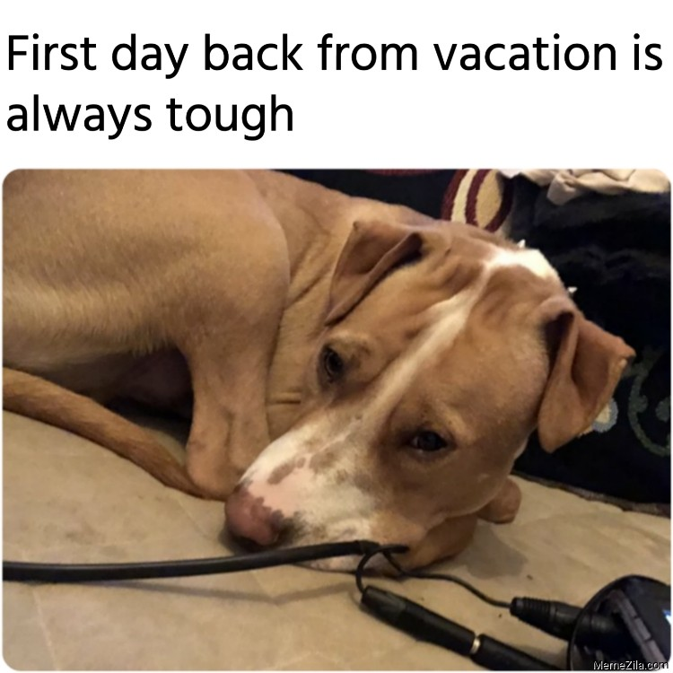 First day back from vacation is always tough meme