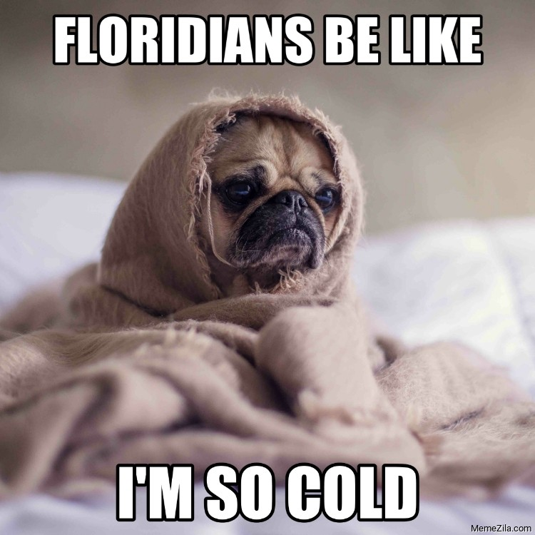 Floridians be like Im so cold meme