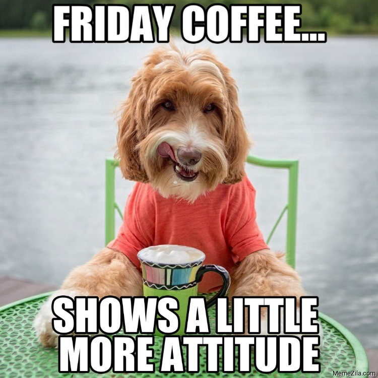 Friday coffee shows a little more attitude dog meme