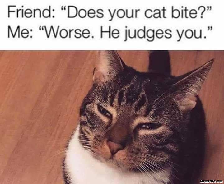 Friend does your cat bite Me worse he judges you meme