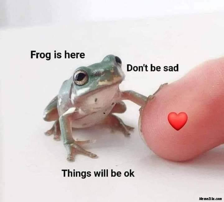Frog is here Dont be sad Things will be ok meme