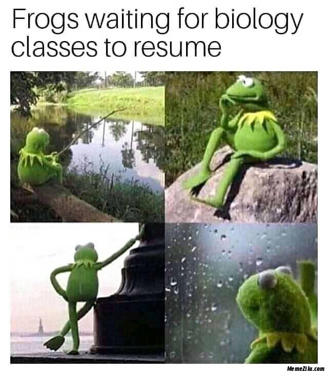 Frogs waiting for biology classes to resume meme