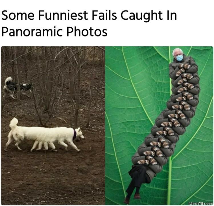 Funniest Animal Fails Caught In Panoramic Photos Bernie Caterpillar meme