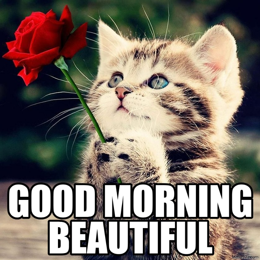 Good Morning Beautiful Cat with rose meme