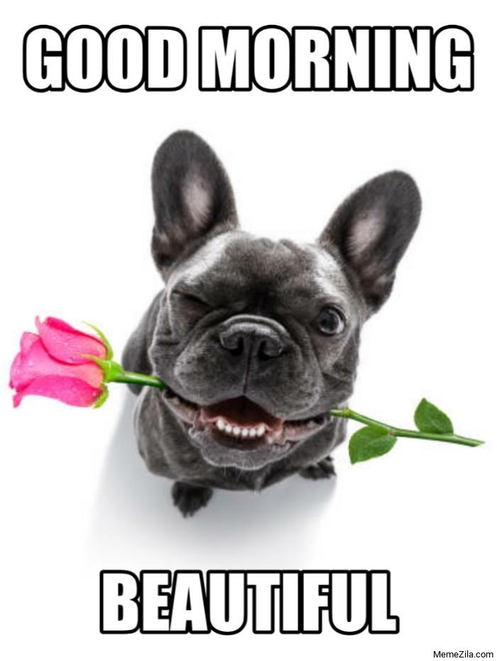 Good Morning Beautiful Dog with rose meme