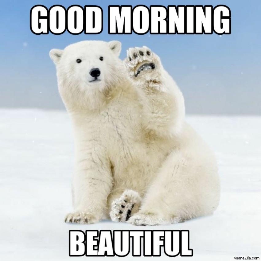 Good Morning Beautiful White bear meme