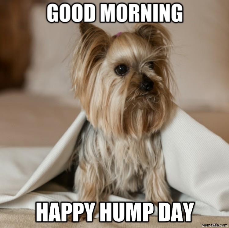 Good morning Happy hump day dog meme