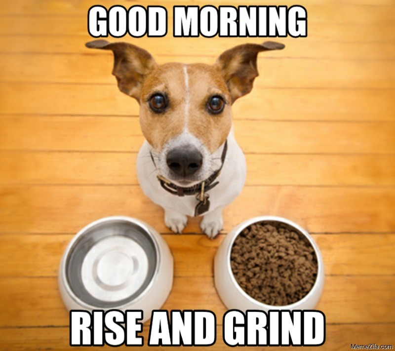 Good morning Rise and grind dog meme