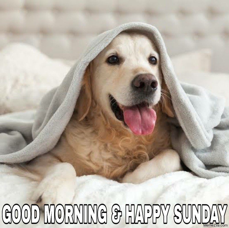 Good morning and happy sunday dog meme