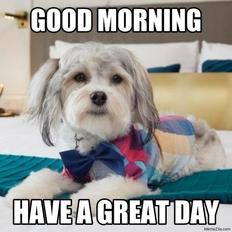 Good morning have a great day dog meme